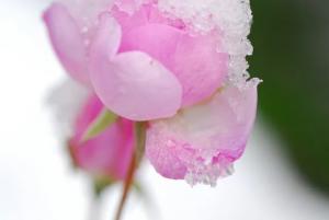 ~ 雪 ~